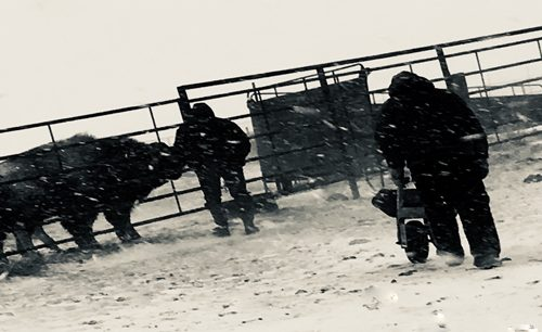 Picking stalls in the storm
